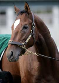 Classic Pedigree Profile: Brother Derek