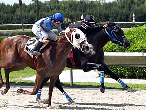 Brothersofthetime wins the 2013 Seacliff Stakes.
