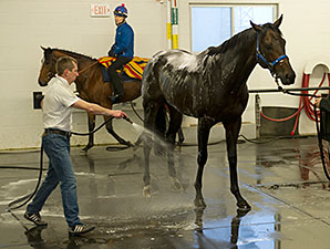 Brown Panther preps for the Pattison Canadian International.