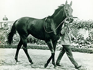 Buckpasser and His Influence on the Breed
