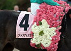 Zenyatta - 2010 Apple Blossom