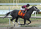 Florida Derby Likely Next for Cairo Prince