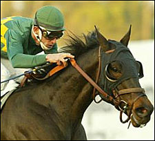 Cajun Beat Sizzles for Frankel in Turf Express