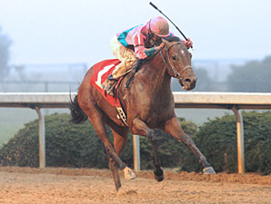 Ohio Derby Field Taking Shape