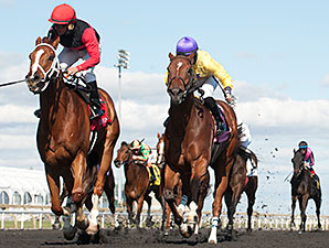 Calgary Cat wins the Jaques Cartier Stakes.