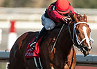 Champ Calgary Cat Up Late in Jacques Cartier