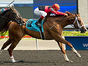 Calgary Cat wins the 2015 Achievement Stakes.