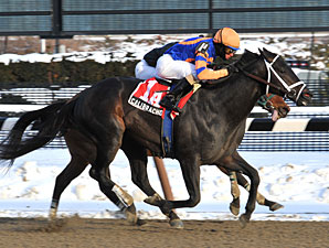 Calibrachoa Rides Win Streak Into Tom Fool