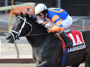 Streaking Calibrachoa Romps in Tom Fool