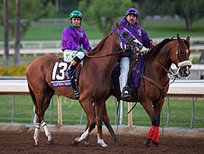California Chrome prior to the Breeders' Cup Classic.