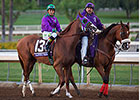 California Chrome Will Campaign in 2015