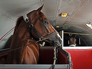 California Chrome to Arrive at Pimlico