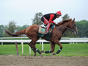 California Chrome - Belmont Park, May 28, 2014