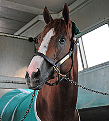 Route du Kentucky Derby/Kentucky Oaks 2014 - Page 3 CaliforniaChrome2DerbyVanRide2014RS225