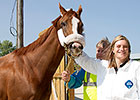 California Chrome Arrives at Arlington
