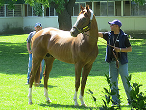 California Chrome arrives at Belmont Park May 20.