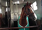 California Chrome on the Van