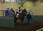 BC 2014: California Chrome Feisty in Paddock