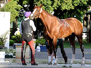 California Chrome - Belmont Park, May 29, 2014.