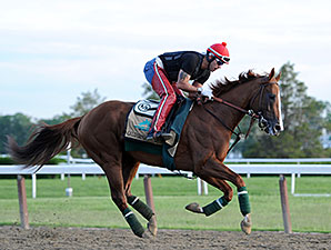 California Chrome - Belmont Park, May 30, 2014.