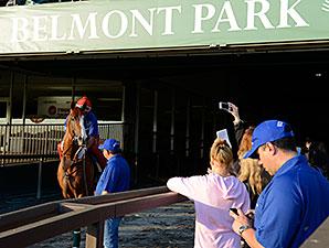 California Chrome - Belmont Park, June 3, 2014.