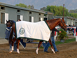 California Chrome - Breeders' Cup 2014