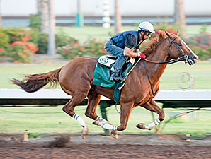 California Chrome Works at Los Alamitos on August 22, 2014.