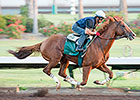 California Chrome Draws Rail in PA Derby