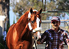 California Chrome Back Home in Sherman Barn