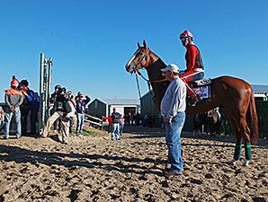California Chrome - Parx, September 17, 2014.