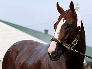 California Chrome Returning Early From Break