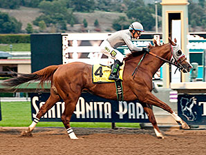 California Chrome Doesn't Have To Stay Home But Trust Trainer To Do His Job