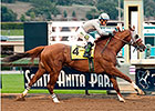 California Chrome 'Feeling Good' in Dubai