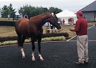 California Chrome Greets His Fans