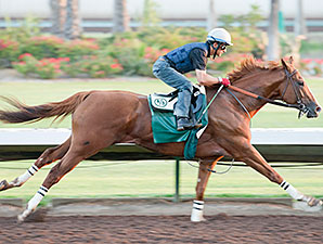 California Chrome Sharpens Up at Los Alamitos