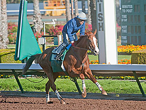 California Chrome Was Flashy From the Start