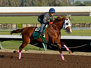 California Chrome - Los Alamitos Work, October 25, 2014.