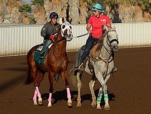 California Chrome - Los Alamitos, October 25, 2014.