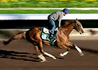 California Chrome Work 11/17/2014