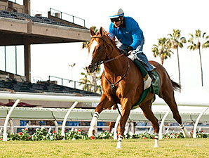 Hollywood Derby Likely After Chrome's Workout