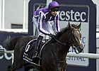 British Star Camelot Being Treated for Colic