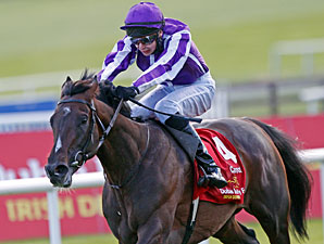 Camelot Powers to Victory in Irish Derby
