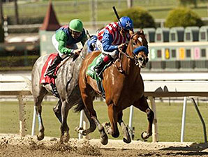 Can the Man wins the 2013 Speakeasy Stakes.