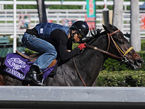 Cannonball at the 2009 Breeders' Cup.