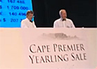 Cape Thoroughbred Sale Preview