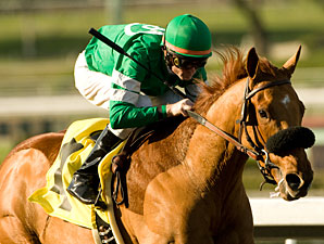 Caracortado Puts New Indiana Stallion on Map