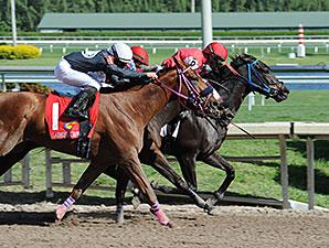 Carolina Lizard wins the 2013 Iron Lady Stakes.