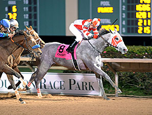 Cassatt wins the 2015 Houston Ladies Classic Stakes.