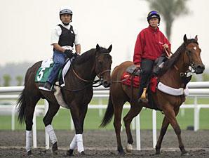 Champ Pegasus Dubai 2011