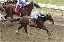 Sprint Star Champali to Glencrest for '05